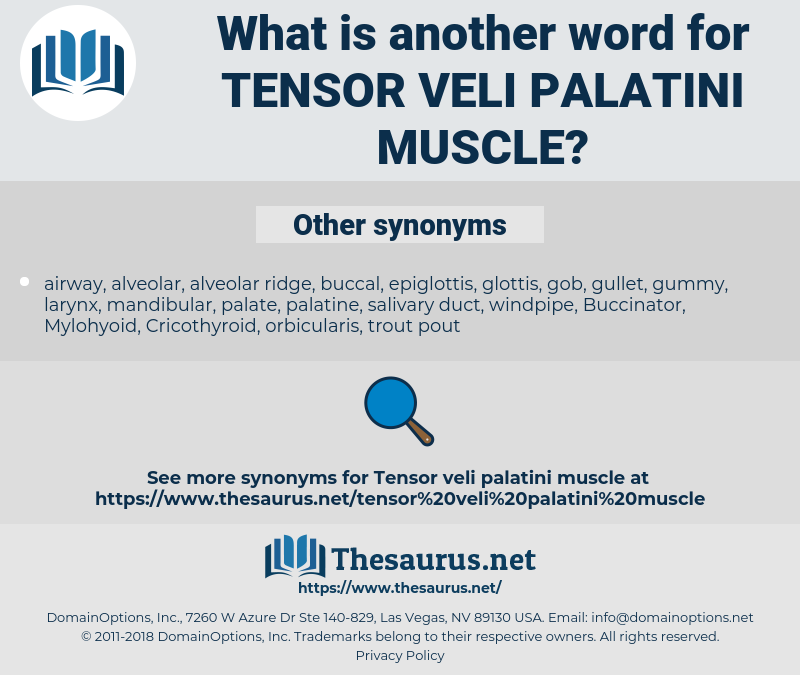 tensor veli palatini muscle, synonym tensor veli palatini muscle, another word for tensor veli palatini muscle, words like tensor veli palatini muscle, thesaurus tensor veli palatini muscle