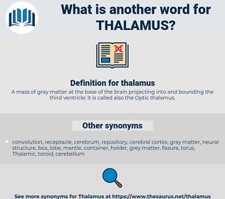 thalamus, synonym thalamus, another word for thalamus, words like thalamus, thesaurus thalamus