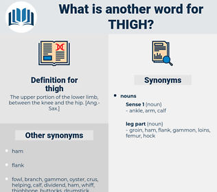 thigh, synonym thigh, another word for thigh, words like thigh, thesaurus thigh