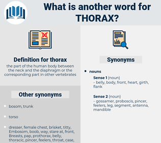 thorax, synonym thorax, another word for thorax, words like thorax, thesaurus thorax