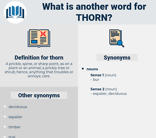 thorn, synonym thorn, another word for thorn, words like thorn, thesaurus thorn