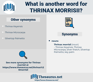 Thrinax Morrisii, synonym Thrinax Morrisii, another word for Thrinax Morrisii, words like Thrinax Morrisii, thesaurus Thrinax Morrisii
