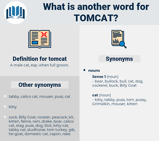 tomcat, synonym tomcat, another word for tomcat, words like tomcat, thesaurus tomcat