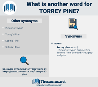 Torrey Pine, synonym Torrey Pine, another word for Torrey Pine, words like Torrey Pine, thesaurus Torrey Pine