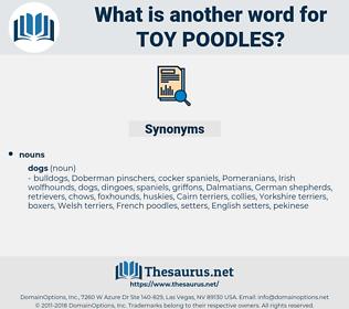 toy poodles, synonym toy poodles, another word for toy poodles, words like toy poodles, thesaurus toy poodles