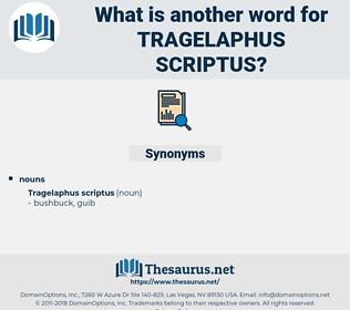 Tragelaphus Scriptus, synonym Tragelaphus Scriptus, another word for Tragelaphus Scriptus, words like Tragelaphus Scriptus, thesaurus Tragelaphus Scriptus