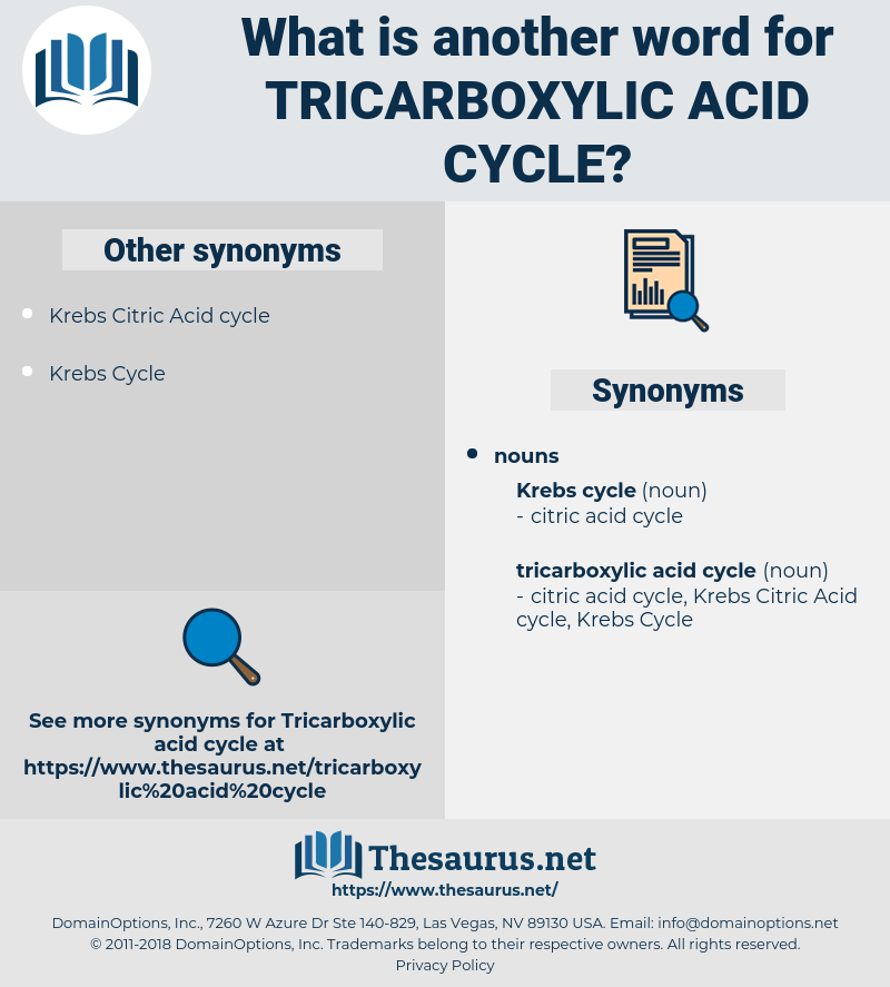 Tricarboxylic Acid Cycle, synonym Tricarboxylic Acid Cycle, another word for Tricarboxylic Acid Cycle, words like Tricarboxylic Acid Cycle, thesaurus Tricarboxylic Acid Cycle