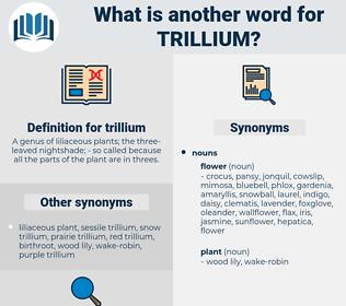 trillium, synonym trillium, another word for trillium, words like trillium, thesaurus trillium