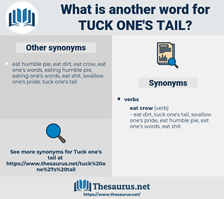 tuck one's tail, synonym tuck one's tail, another word for tuck one's tail, words like tuck one's tail, thesaurus tuck one's tail