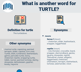 turtle, synonym turtle, another word for turtle, words like turtle, thesaurus turtle