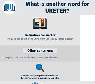 ureter, synonym ureter, another word for ureter, words like ureter, thesaurus ureter