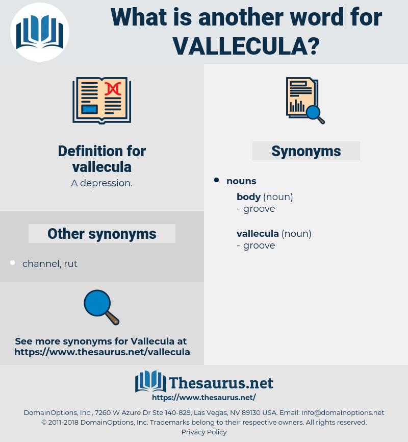 vallecula, synonym vallecula, another word for vallecula, words like vallecula, thesaurus vallecula