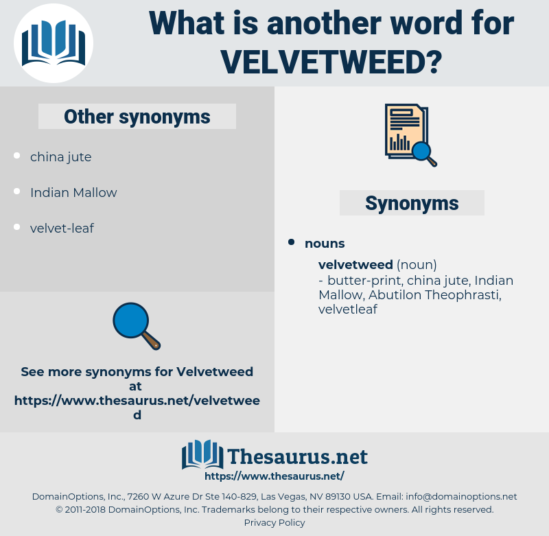 velvetweed, synonym velvetweed, another word for velvetweed, words like velvetweed, thesaurus velvetweed