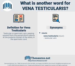 Vena Testicularis, synonym Vena Testicularis, another word for Vena Testicularis, words like Vena Testicularis, thesaurus Vena Testicularis