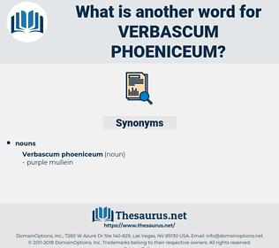 Verbascum Phoeniceum, synonym Verbascum Phoeniceum, another word for Verbascum Phoeniceum, words like Verbascum Phoeniceum, thesaurus Verbascum Phoeniceum