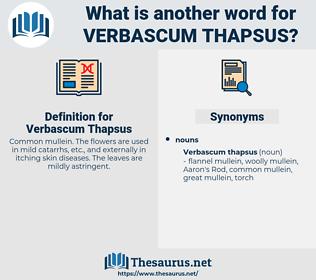 Verbascum Thapsus, synonym Verbascum Thapsus, another word for Verbascum Thapsus, words like Verbascum Thapsus, thesaurus Verbascum Thapsus