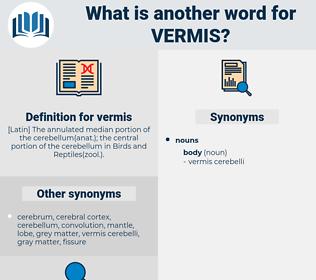 vermis, synonym vermis, another word for vermis, words like vermis, thesaurus vermis