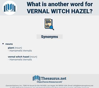 vernal witch hazel, synonym vernal witch hazel, another word for vernal witch hazel, words like vernal witch hazel, thesaurus vernal witch hazel