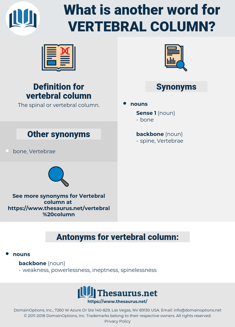vertebral column, synonym vertebral column, another word for vertebral column, words like vertebral column, thesaurus vertebral column