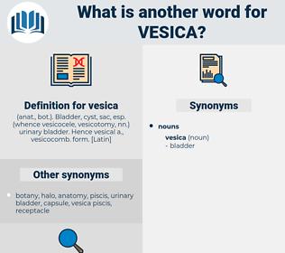 vesica, synonym vesica, another word for vesica, words like vesica, thesaurus vesica