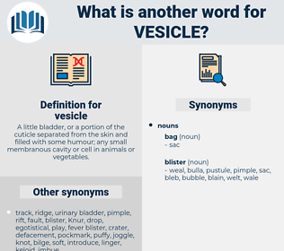 vesicle, synonym vesicle, another word for vesicle, words like vesicle, thesaurus vesicle