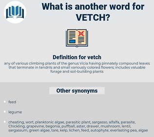 vetch, synonym vetch, another word for vetch, words like vetch, thesaurus vetch