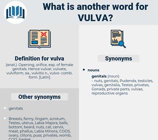 vulva, synonym vulva, another word for vulva, words like vulva, thesaurus vulva