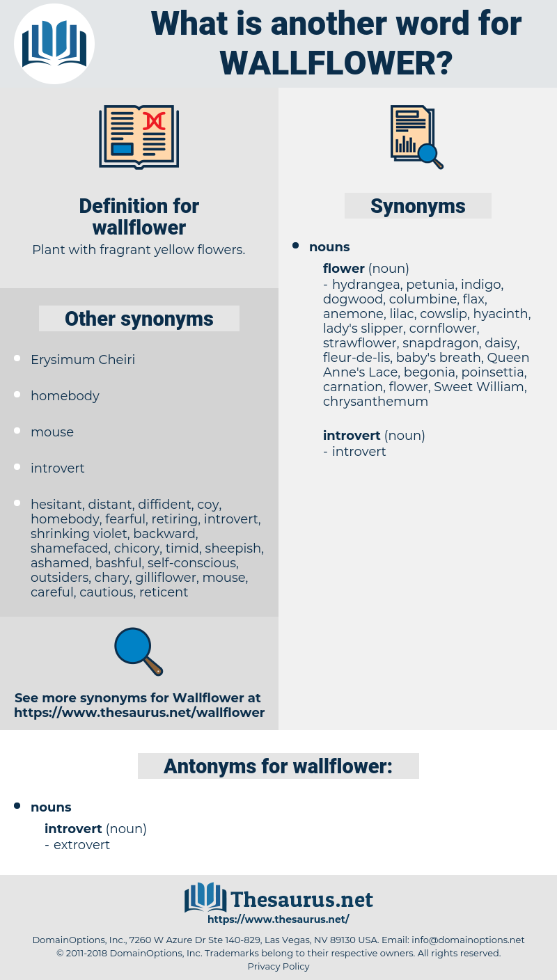 wallflower, synonym wallflower, another word for wallflower, words like wallflower, thesaurus wallflower