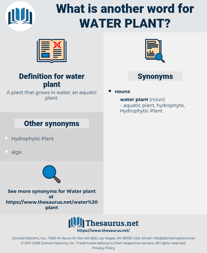 water plant, synonym water plant, another word for water plant, words like water plant, thesaurus water plant