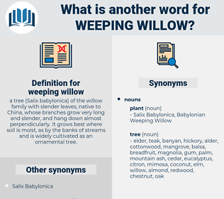weeping willow, synonym weeping willow, another word for weeping willow, words like weeping willow, thesaurus weeping willow