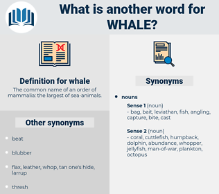 whale, synonym whale, another word for whale, words like whale, thesaurus whale