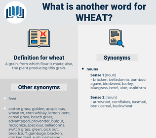 wheat, synonym wheat, another word for wheat, words like wheat, thesaurus wheat