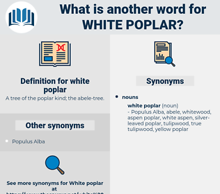 white poplar, synonym white poplar, another word for white poplar, words like white poplar, thesaurus white poplar