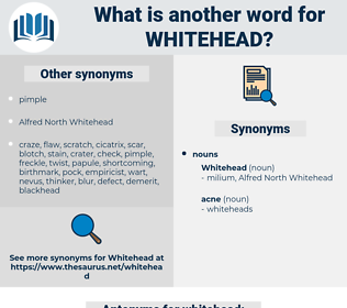 whitehead, synonym whitehead, another word for whitehead, words like whitehead, thesaurus whitehead