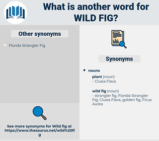 wild fig, synonym wild fig, another word for wild fig, words like wild fig, thesaurus wild fig