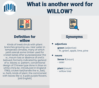 willow, synonym willow, another word for willow, words like willow, thesaurus willow