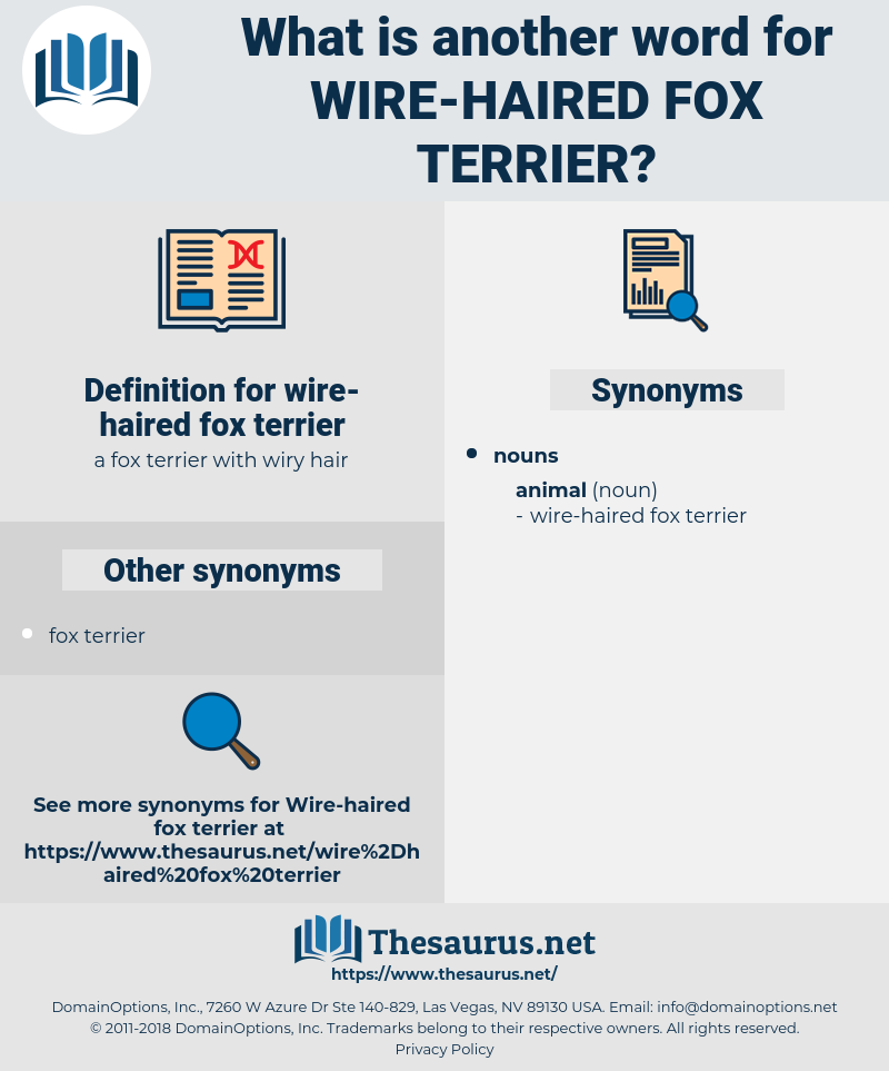 wire-haired fox terrier, synonym wire-haired fox terrier, another word for wire-haired fox terrier, words like wire-haired fox terrier, thesaurus wire-haired fox terrier