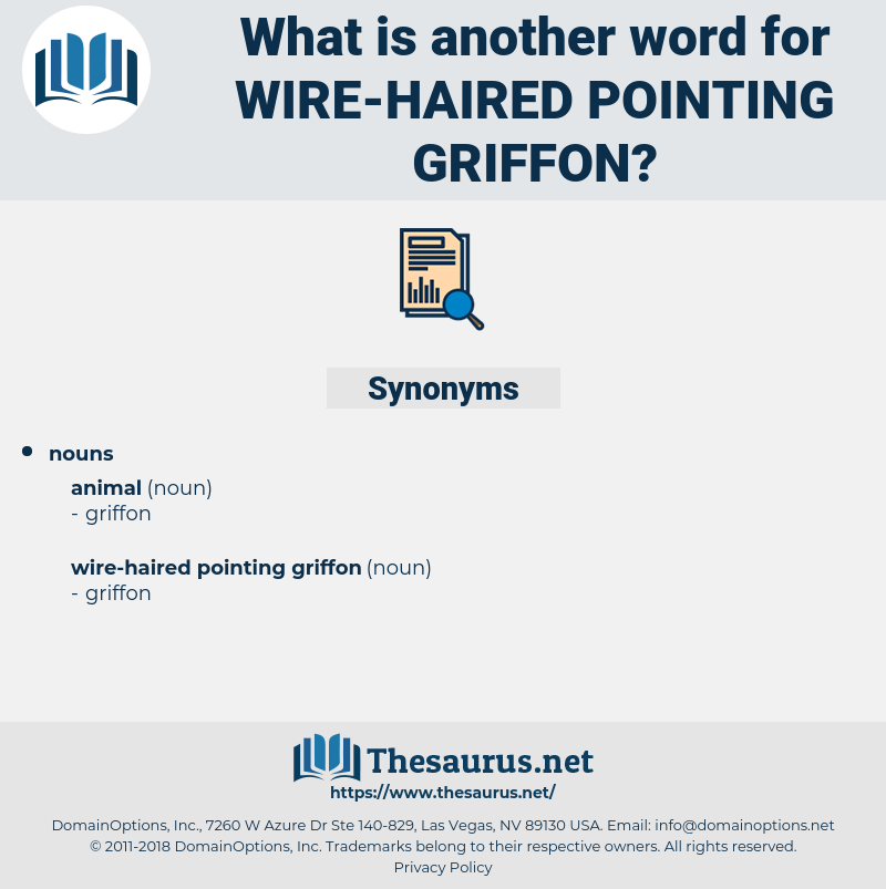 wire-haired pointing griffon, synonym wire-haired pointing griffon, another word for wire-haired pointing griffon, words like wire-haired pointing griffon, thesaurus wire-haired pointing griffon