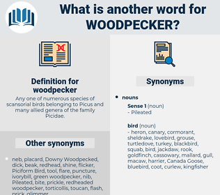 woodpecker, synonym woodpecker, another word for woodpecker, words like woodpecker, thesaurus woodpecker