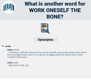 work oneself the bone, synonym work oneself the bone, another word for work oneself the bone, words like work oneself the bone, thesaurus work oneself the bone