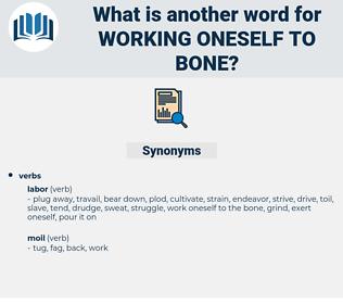 working oneself to bone, synonym working oneself to bone, another word for working oneself to bone, words like working oneself to bone, thesaurus working oneself to bone