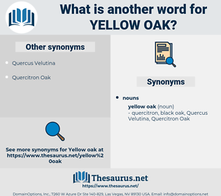 yellow oak, synonym yellow oak, another word for yellow oak, words like yellow oak, thesaurus yellow oak
