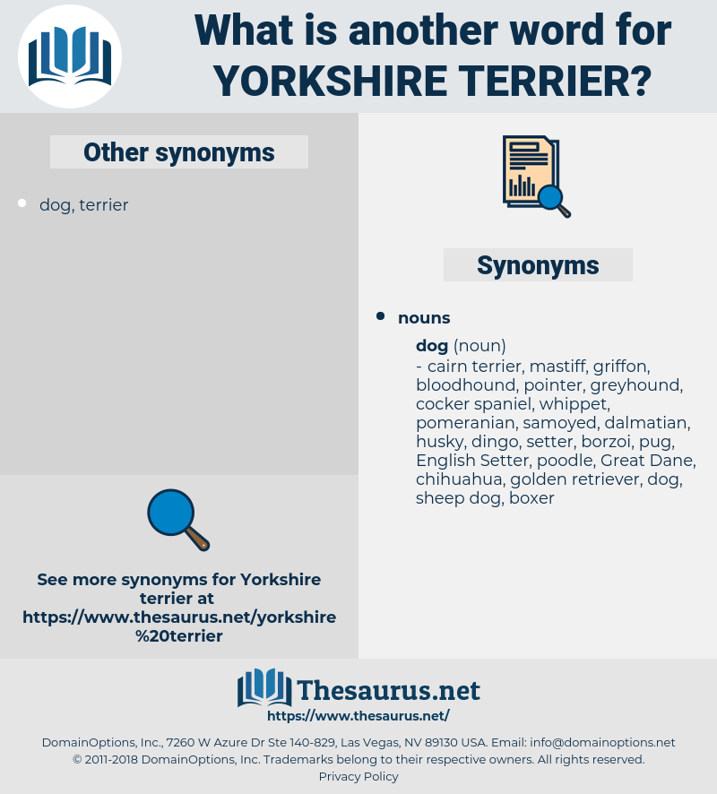 Yorkshire Terrier, synonym Yorkshire Terrier, another word for Yorkshire Terrier, words like Yorkshire Terrier, thesaurus Yorkshire Terrier
