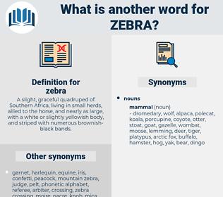 zebra, synonym zebra, another word for zebra, words like zebra, thesaurus zebra
